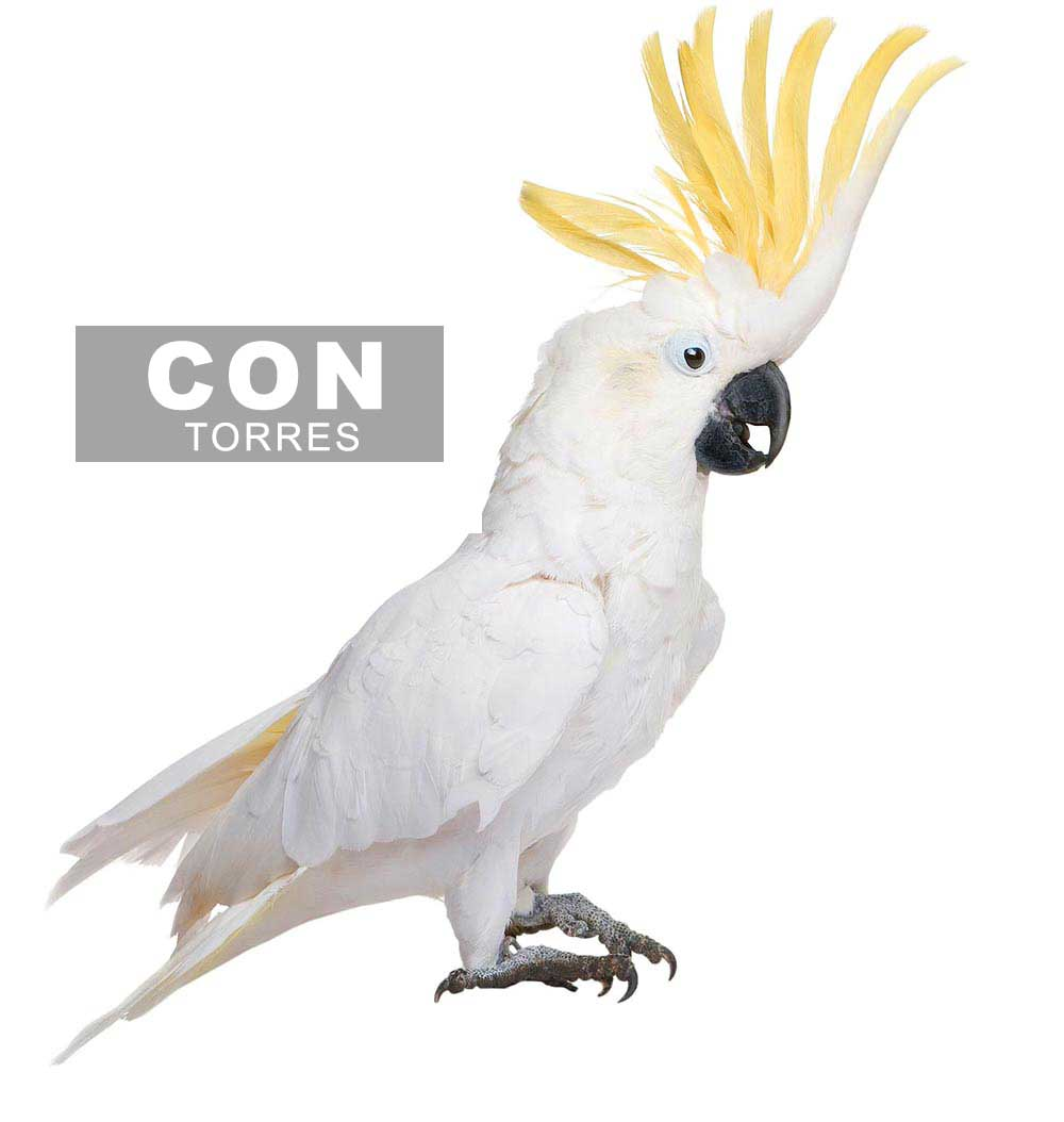 PAJARO-CON